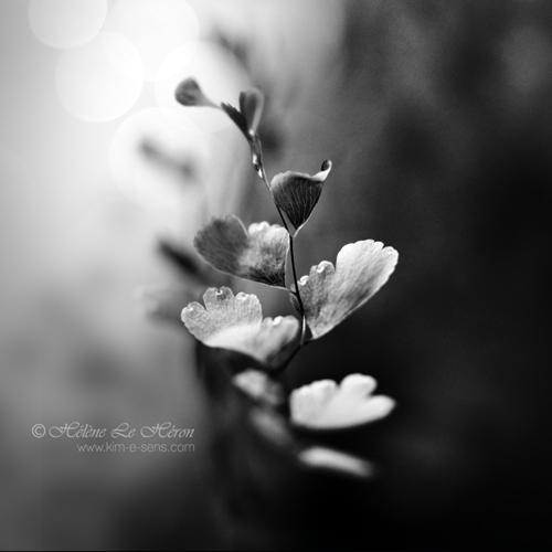 Drakkar noir by kim-e-sens