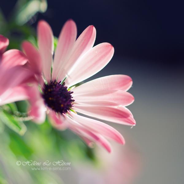 the sweetest light by kim-e-sens