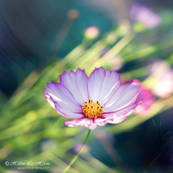 pearl by kim-e-sens
