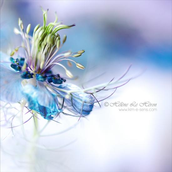 la reine de glace by kim-e-sens