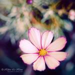 Kiyomi's garden by kim-e-sens