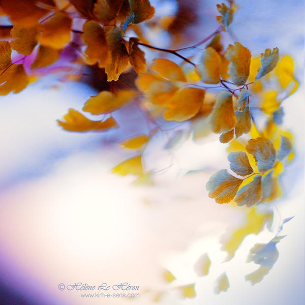 Flamboyante by kim-e-sens