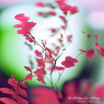 Aflame by kim-e-sens