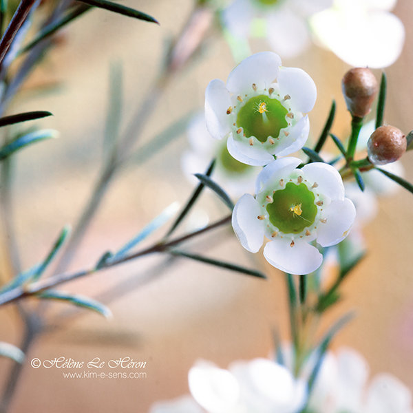 a piece of Jun's bouquet by kim-e-sens