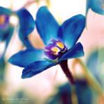 Paint it in blue by kim-e-sens