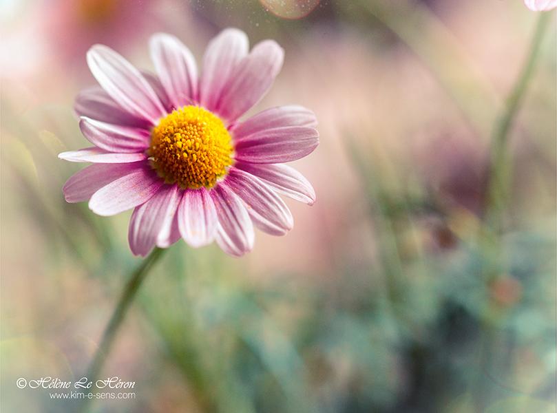 Natural mystic by kim-e-sens
