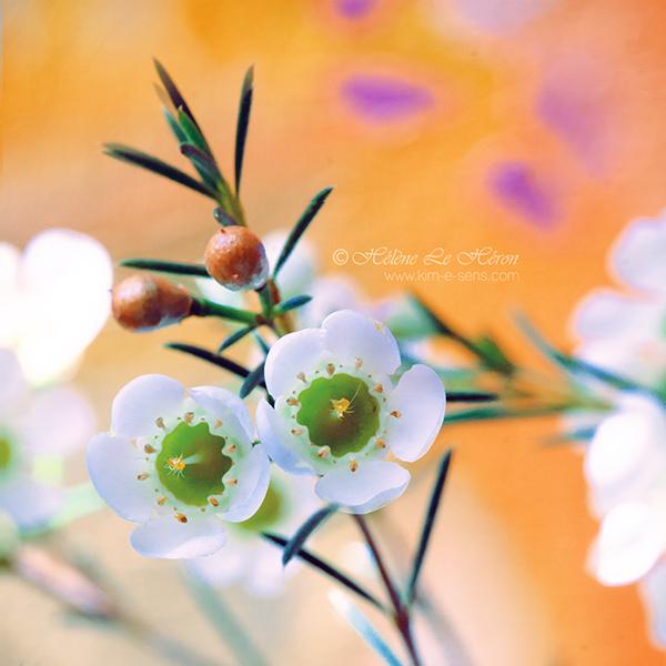Popsy by kim-e-sens