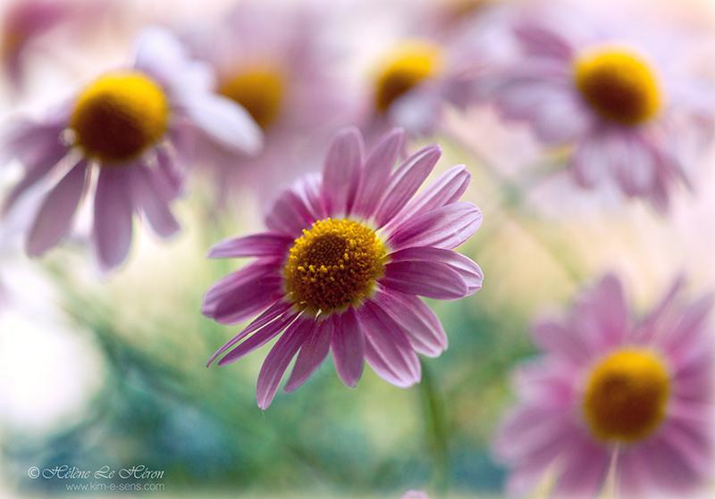 Bloom by kim-e-sens