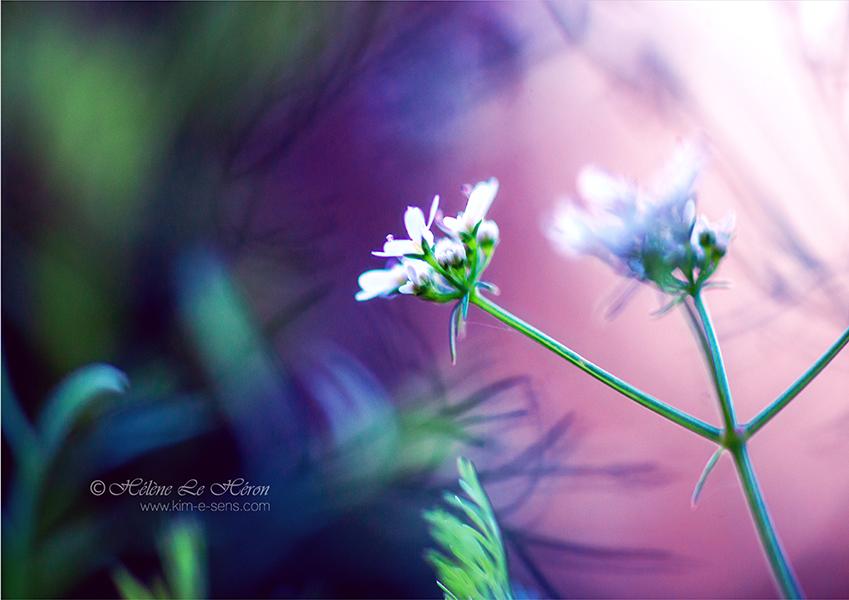 Mystical coriander by kim-e-sens