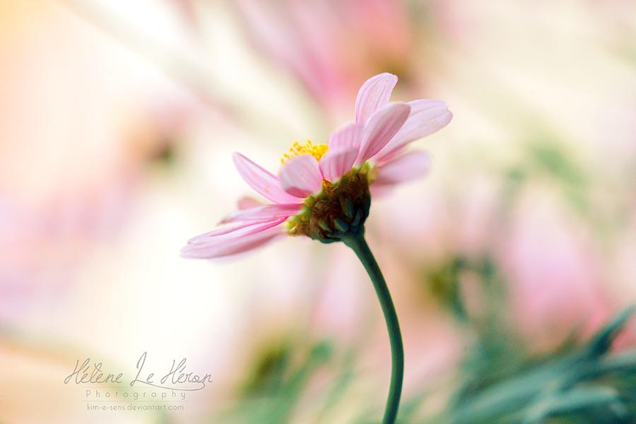 Spring light flavour by kim-e-sens