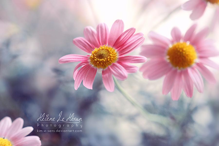 les jolis sentiments by kim-e-sens