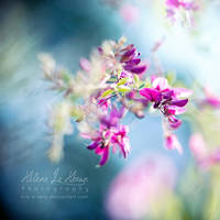 Follow the breath of air by kim-e-sens