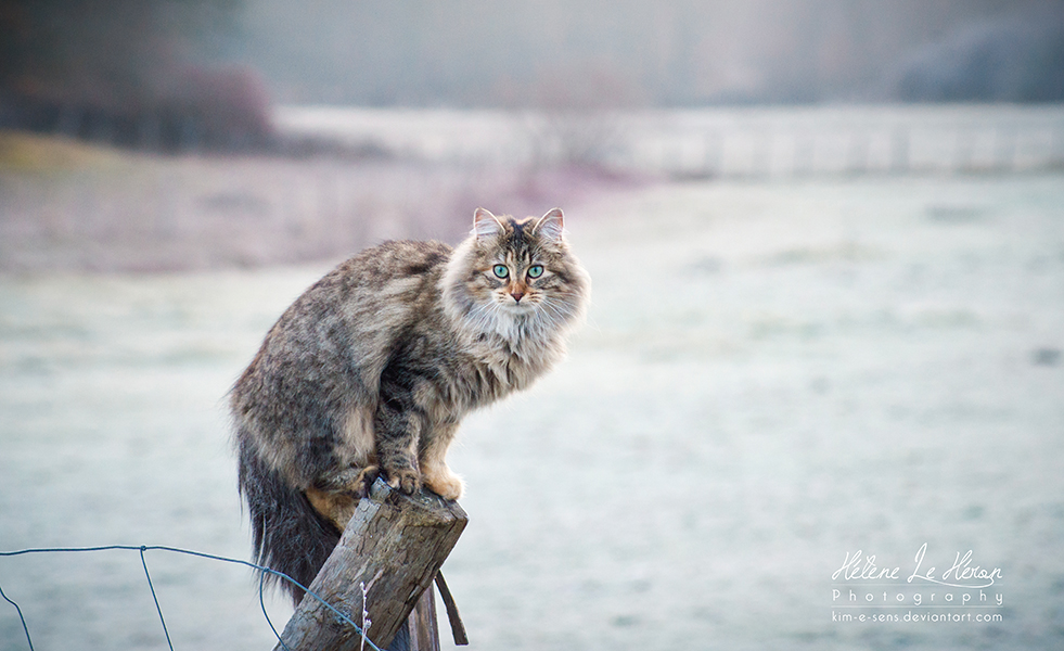 LoOma on a perch by kim-e-sens
