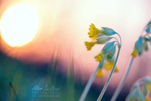 Little fairie's flowers