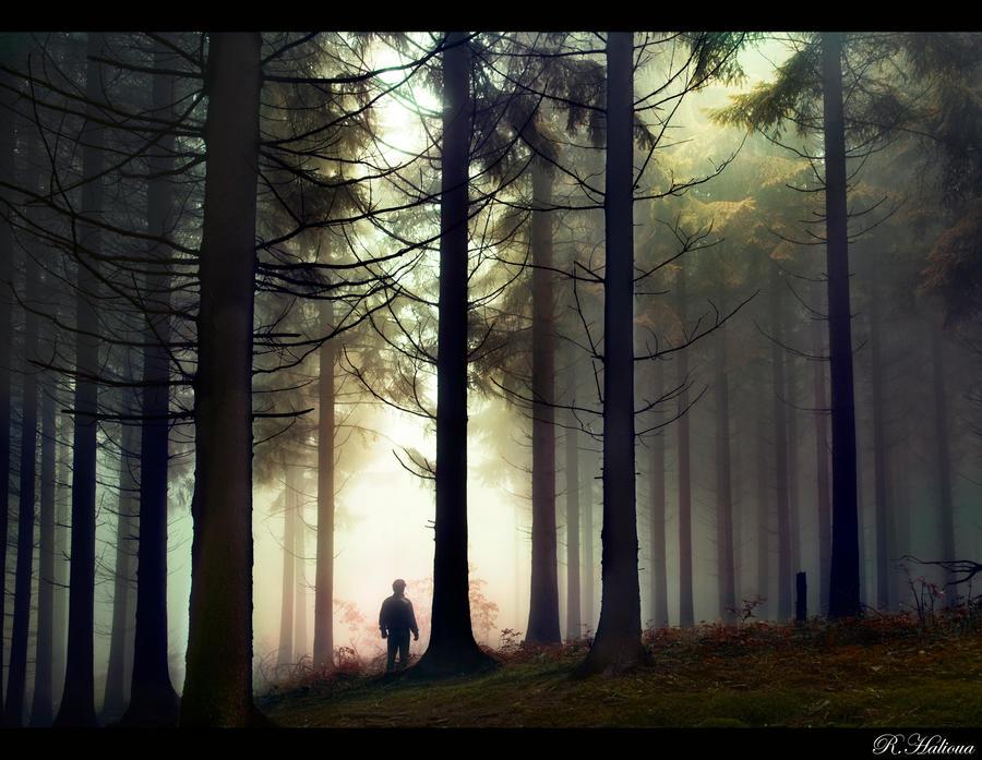 Dark Forest by RobinHalioua