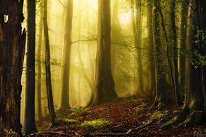 Early Autumn by RobinHalioua