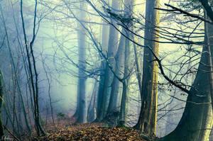 Geisterwald by RobinHalioua