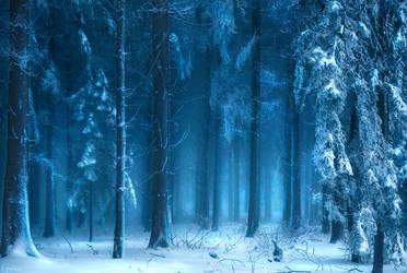 Winterwald by RobinHalioua
