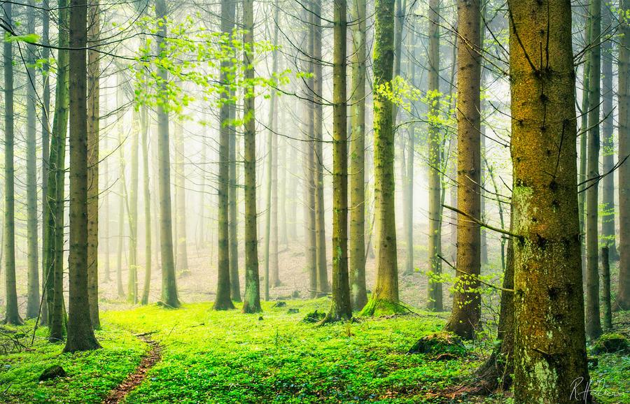 Enchanted Path by RobinHalioua