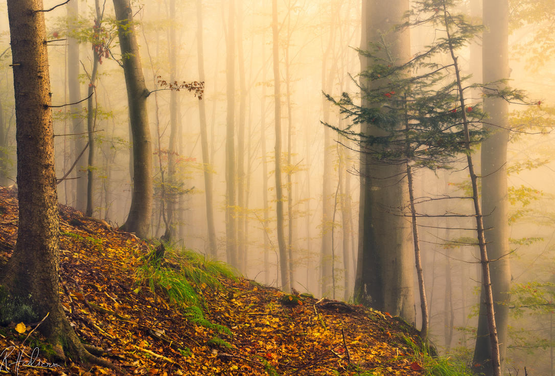 The wonder of autumn by RobinHalioua