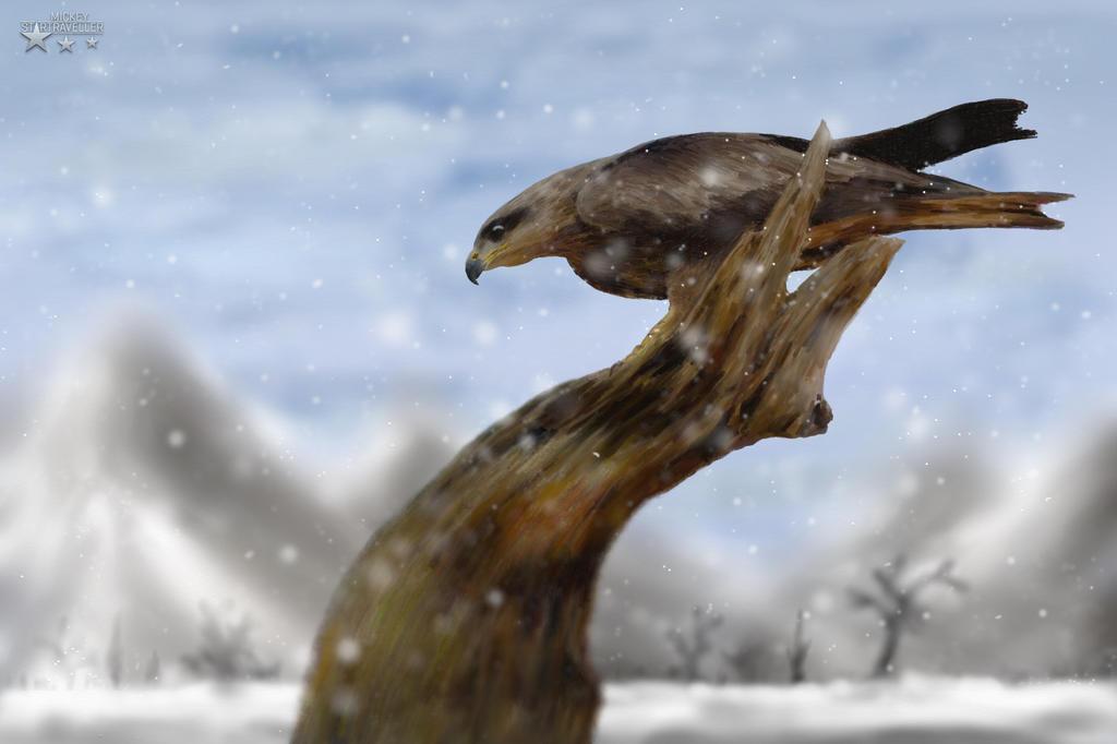 Black kite (Milvus migrans) by YELTZIN