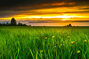 Golden field by Kartum