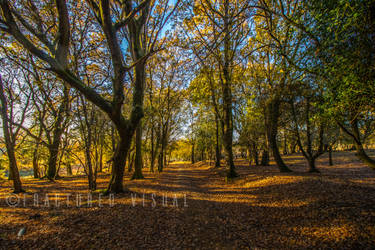 New Forest 5 by Fractured-Visual