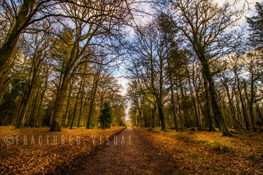 New Forest 6 by Fractured-Visual