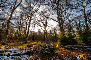 New Forest 7 by Fractured-Visual