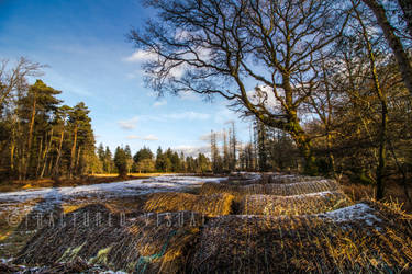 New Forest 8 by Fractured-Visual