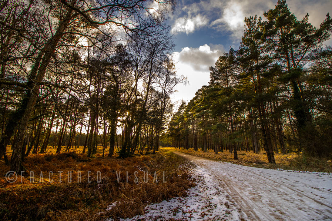 New Forest 11 by Fractured-Visual
