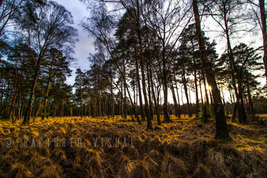 New Forest 14 by Fractured-Visual