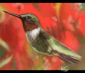 Speed Paint: Humming Bird