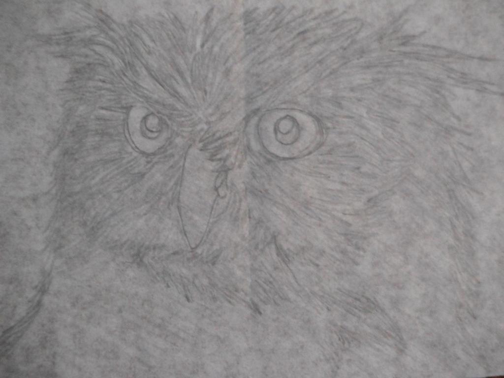 Owl Sketch by TalesofTimeox