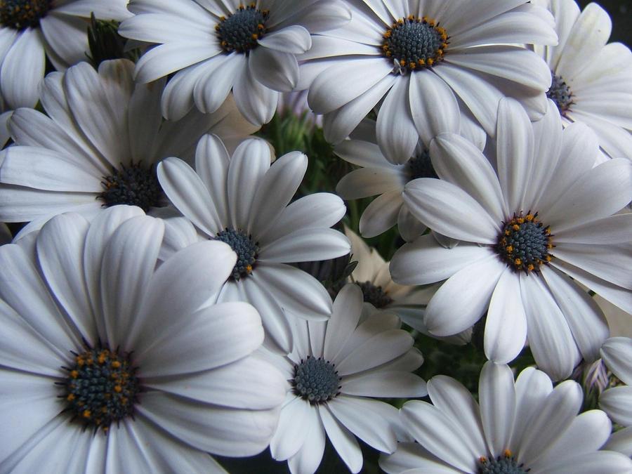Flowers by kmascilak