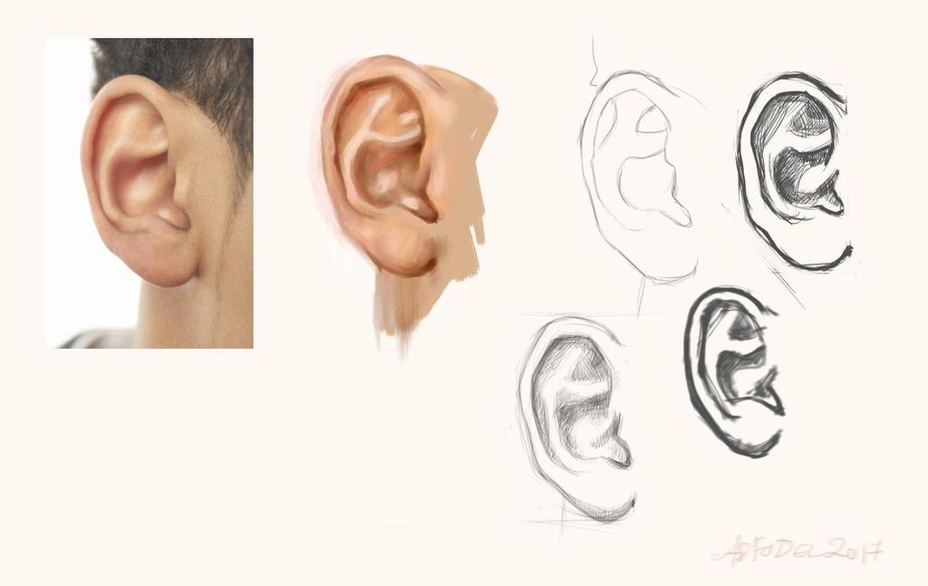 more_ears_by_asfodelium-db37clb.jpg
