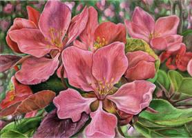 Pink flowers by slightlymadart