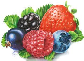Berries by slightlymadart