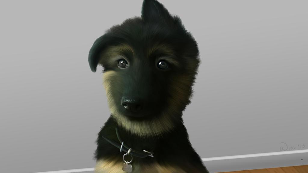 My German Shepherd Puppy Loki by AmazinglikeCheese