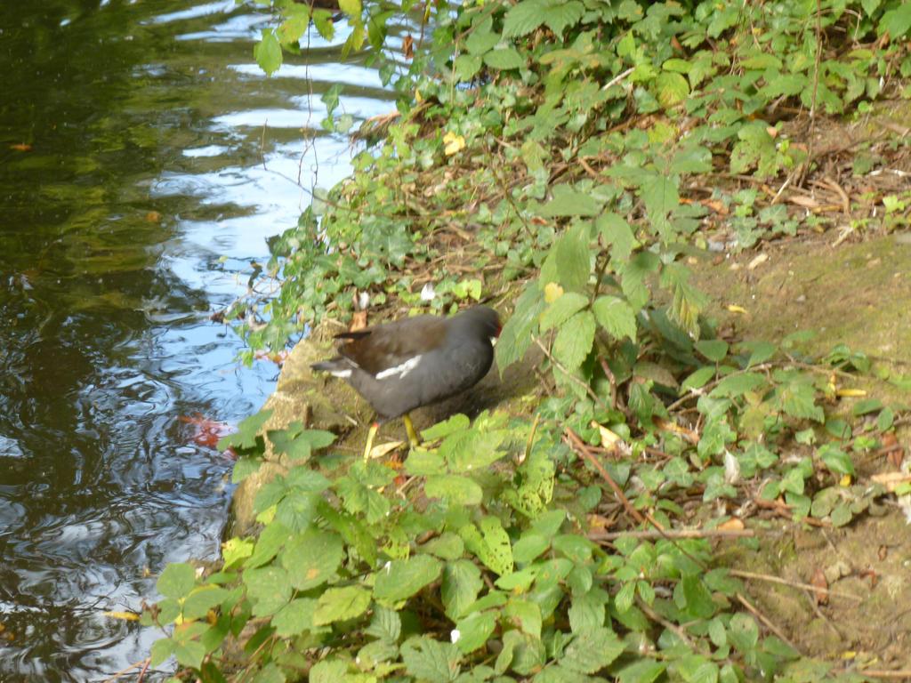 bird by photodash
