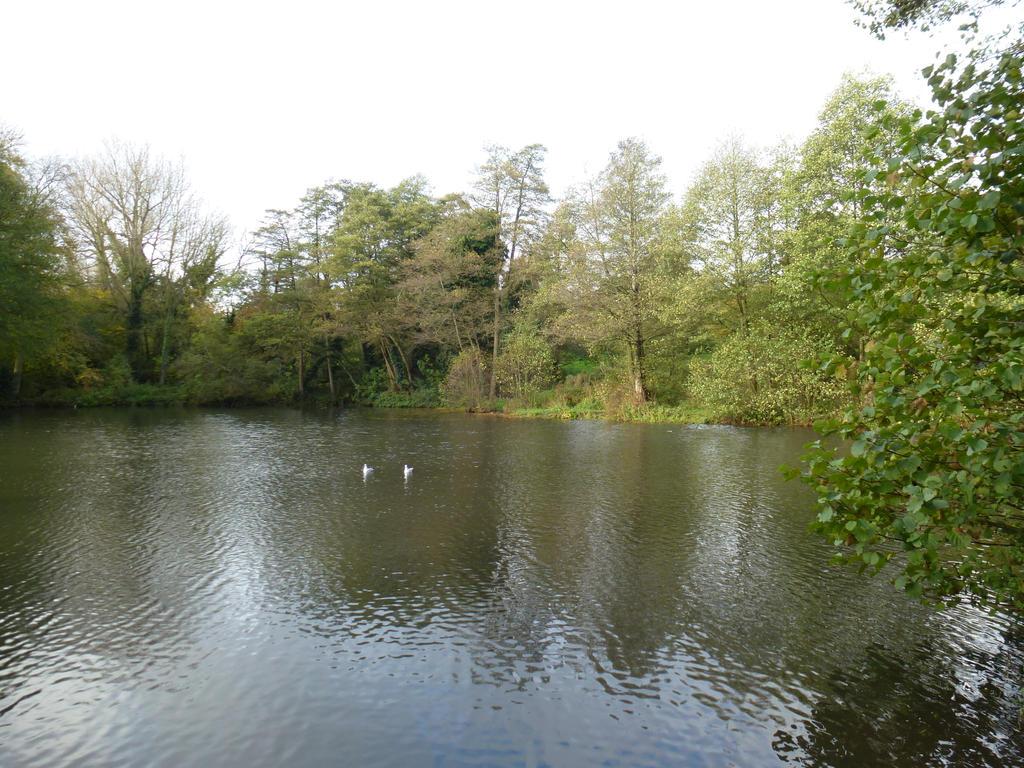Lake by photodash