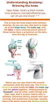 Understanding Anatomy: The Knee
