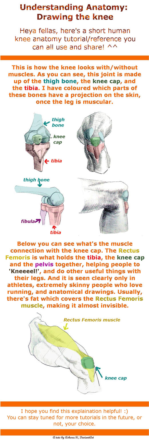 Understanding Anatomy: The Knee by AsharaNi
