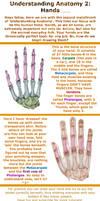Understanding Anatomy 2: Hands