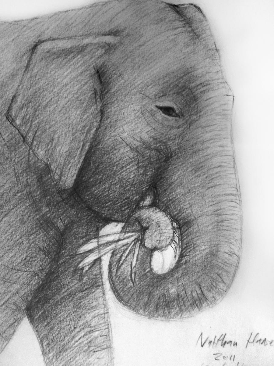 Thai Elephant Thai Elephant by Legal Han