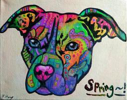 Spring the Staffie (rainbow)