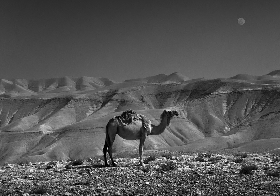 The Sea of the Desert by zeevphoto