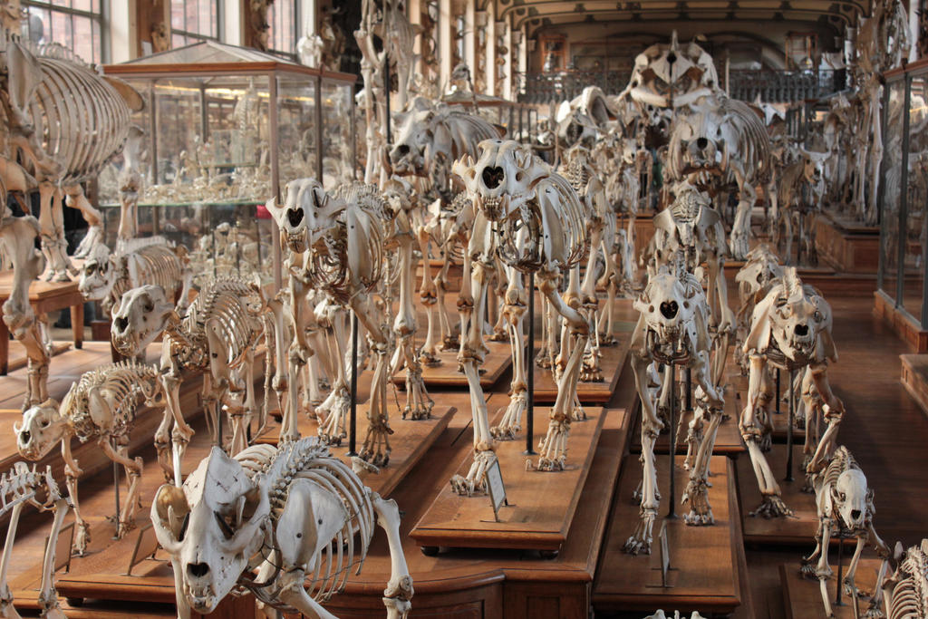 Skulls and Bones by CrAz86