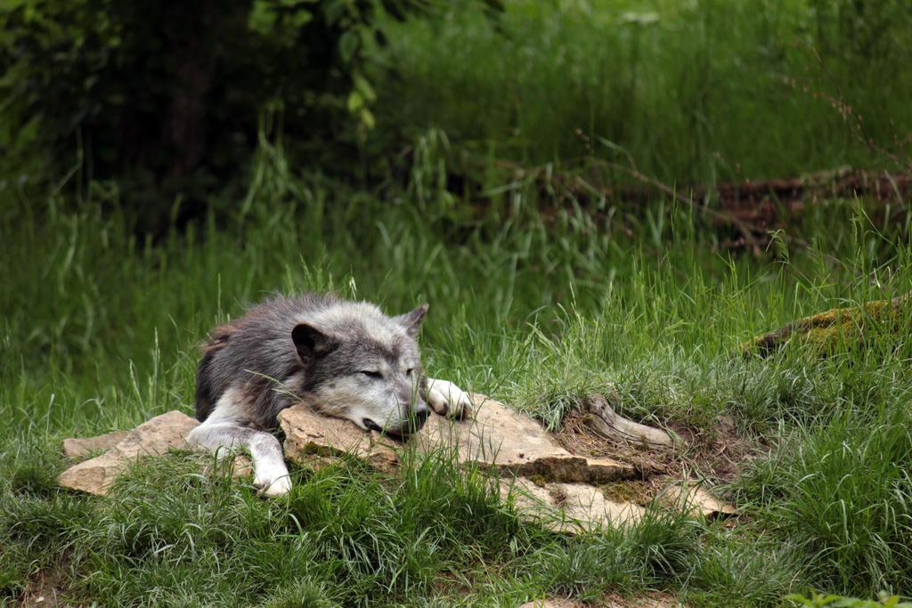 Timberwolf by CrAz86