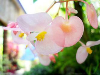 ea3c6ac7 dreamarzh24 1 0 Flower 1 by dreamarzh24